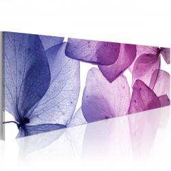 Obraz  Delicate petals