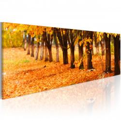 Obraz - Golden leaves