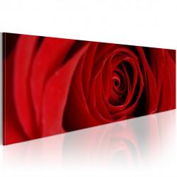 Obraz  Midnight rose