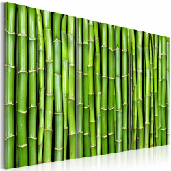 Obraz  Bambusová stěna