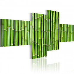 Obraz  Zelené lodyhy bambusu