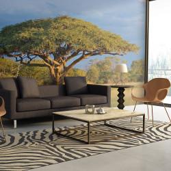 Fototapeta - African acacia tree, Hwange National Park, Zimbabwe
