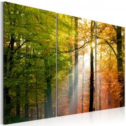 Obraz  Podzimní les