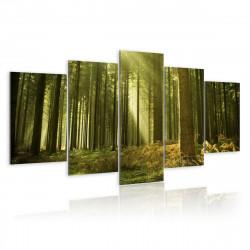 Obraz - V lese