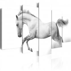 Obraz  Kůň  svoboda a síla