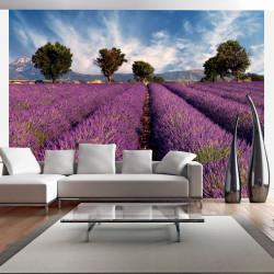 Fototapeta  Lavender field in Provence, France