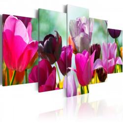 Obraz  Louka růžových tulipánů