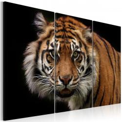 Obraz  Divoký tygr