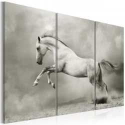 Obraz  Bílý kůň v pohybu