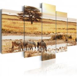 Obraz  Zebry na savaně