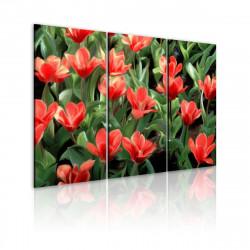 Obraz  Červené tulipány v rozkvětu