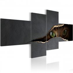 Obraz  Kočičí oči