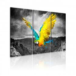 Obraz  Birdofparadise
