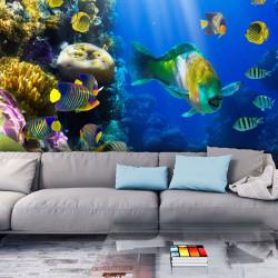 Fototapeta - Underwater paradise